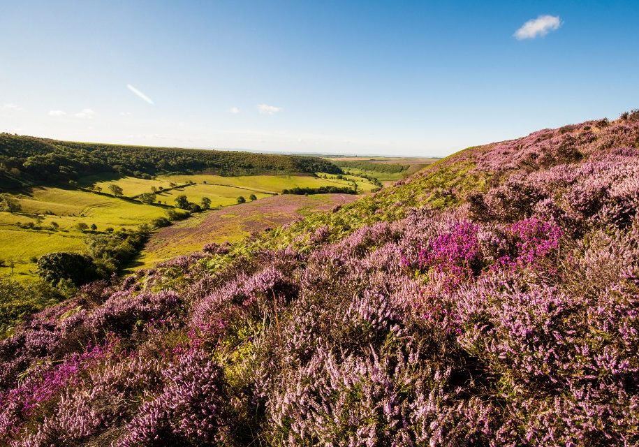 north yorkshire moors local area